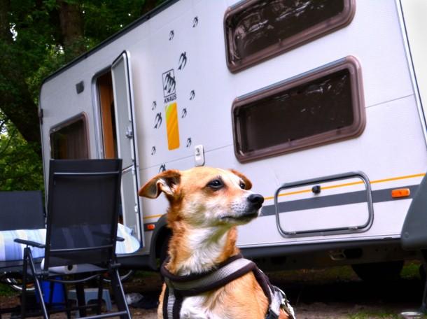 dog caravan Geversduin