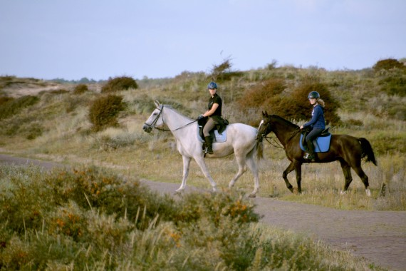 dune ride horse
