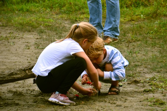children searching insects