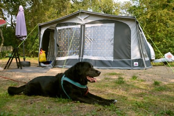 dog caravan campsite camping geversduin holland