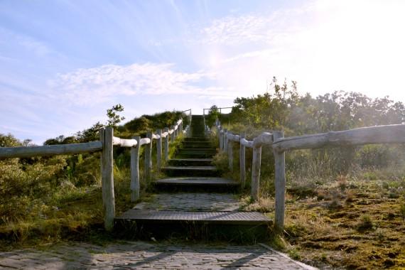 stairs dunes kennemerland