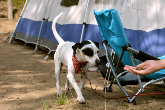 dog food hand tent