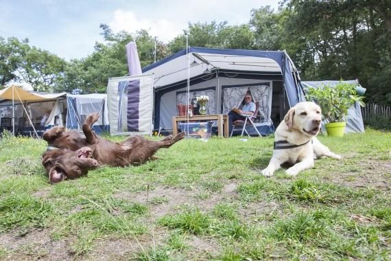 dogs Caravan Geversduin