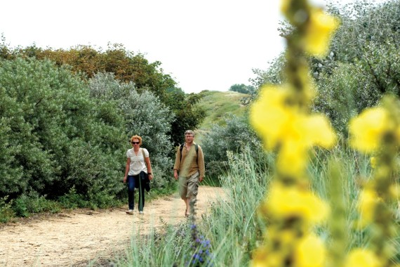 hiking kennemerland dunearea flowers
