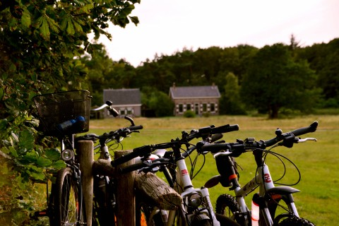 bicycles houses nature dunes kennemerland camping geversduin