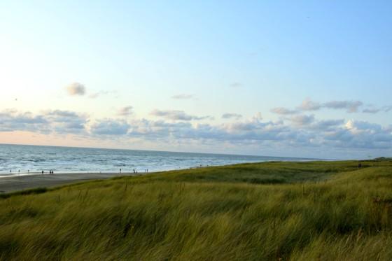 dunes sea egmond beach