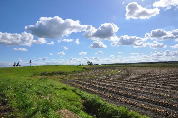 Land of Hilde field sky